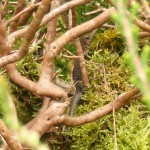 Lizard in bush