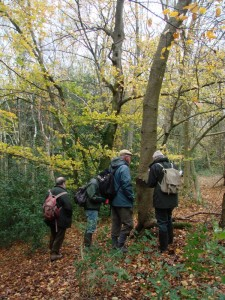 Inspecting Fungi in Harley Hill Wood
