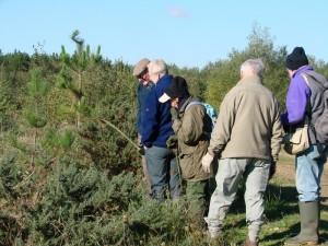 Searching for Blue Fleabane at Bramshill